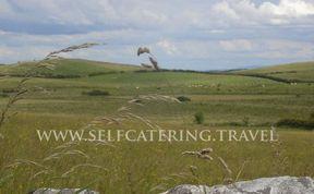 Photo of Typical Irish Farm Cottages