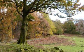 Photo of The Oaks